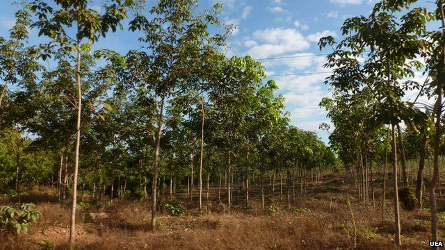 Protected areas are being lost to rubber plantations