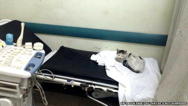 A cat on a hospital bed
