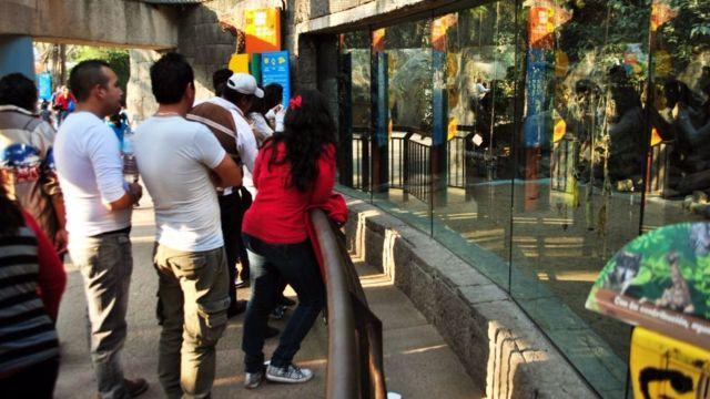 El zoológico de Chapultepec es el más grande del país.