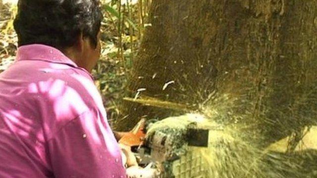Man cutting tree down