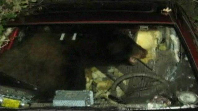 A bear in Ben's car