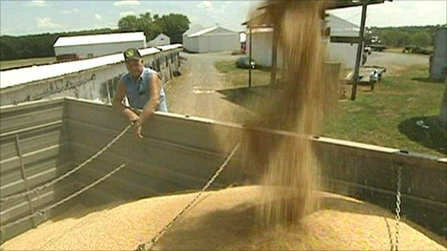 Wheat farmer in the US