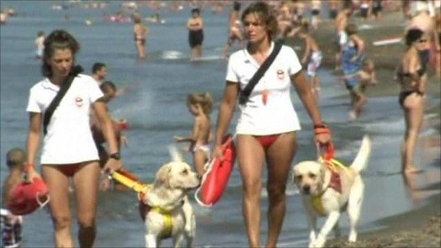 Dogs on patrol walking along an Italian beach