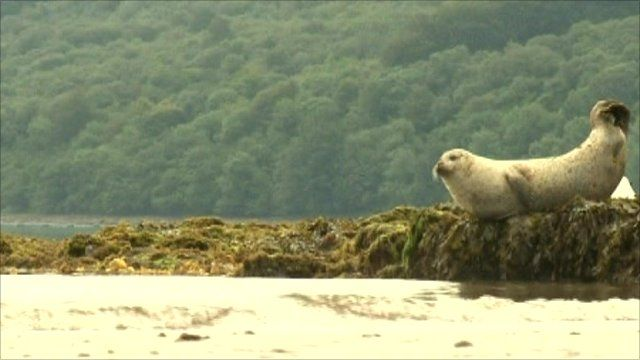 Seal on Scottish coast
