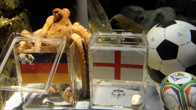 Paul the Octopus