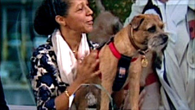 Winner of political dog award
