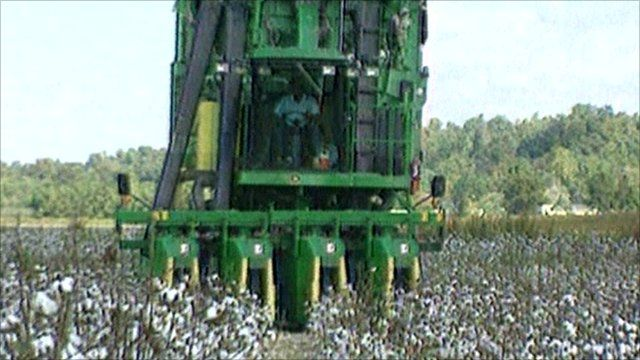 A tractor in a cotton field