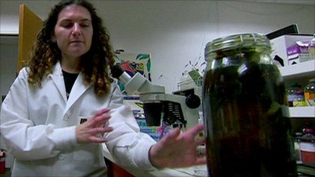 Nasa astrobiologist Dr Felisa