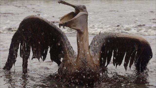 Oil covered bird