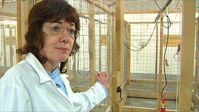 Professor Helen Sang, University of Edinburgh's Roslin Institute