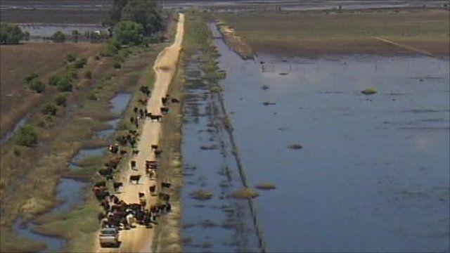 Livestock has been taken to dry ground