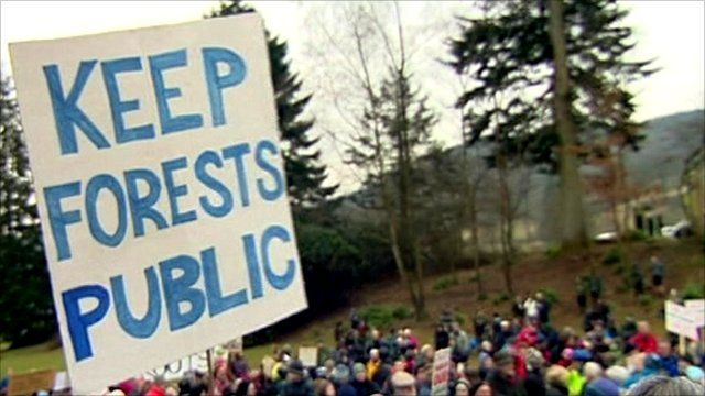 Forest campaigners