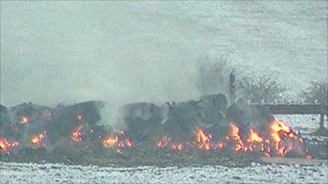 Burning cattle