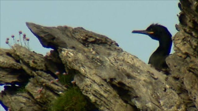 Seabird on rocks