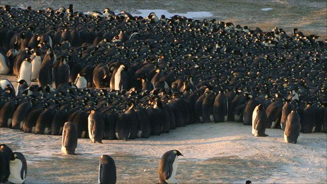 Penguin colony (Daniel Zitterbart)