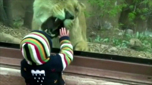 Child with lion at zoo