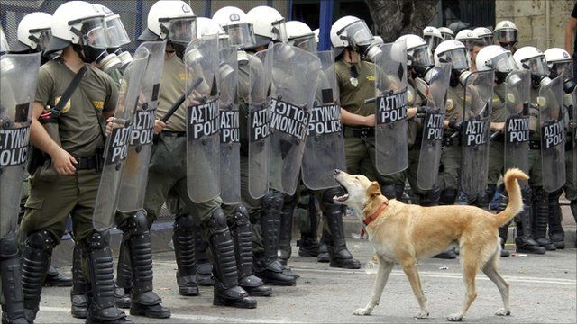 A dog barks at riot police in Athens