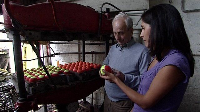 Inside the Price tennis ball factory
