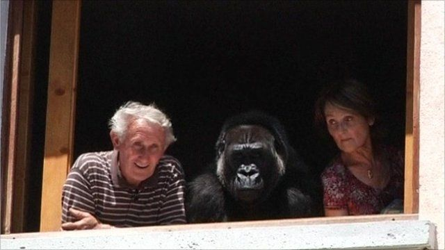 Couple with the gorilla they adopted