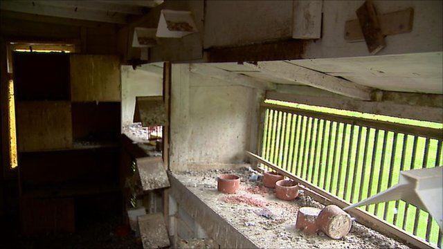 Inside a pigeon coop