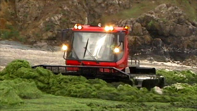 Algae being cleared from beach in Brittany