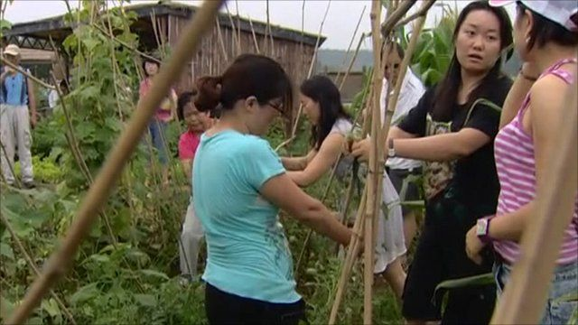 China's part-time farmers working