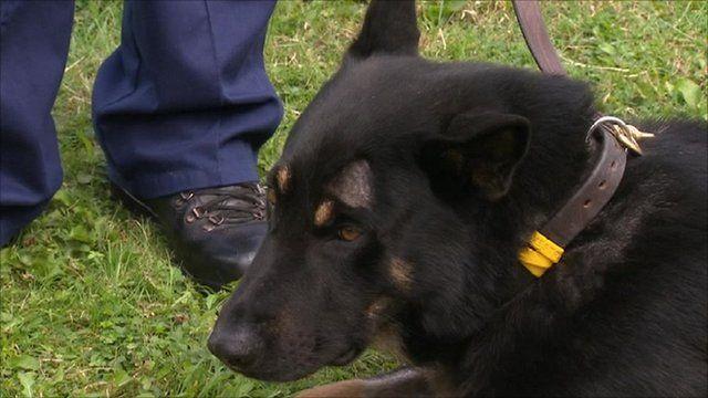 Police dog Obi