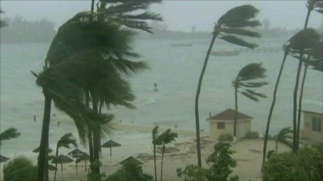 Palm trees struggle against hurricane Irene