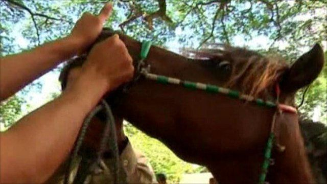 Pony being medicated in Cambodia