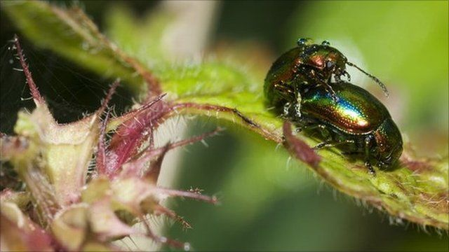 insects on leaf