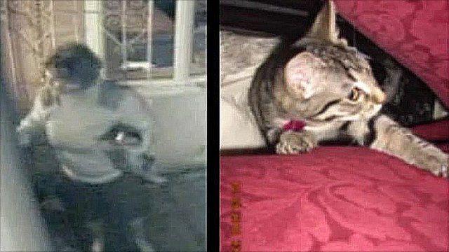 CCTV of Christine Hemming stealing kitten 'Beauty'
