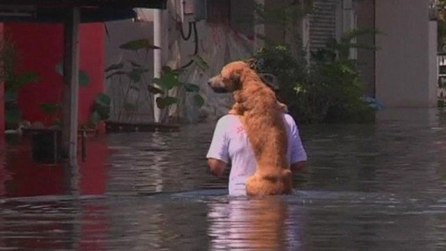 Man and dog in floodwater