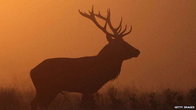 A red stag stands in the early morning fog in Richmond Park