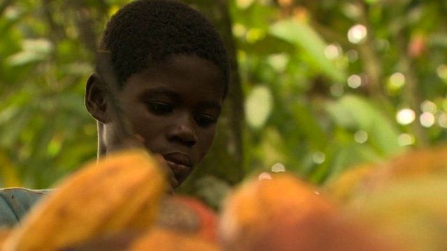 Boy working on cocoa pods
