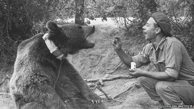 A soldier feeds Wojtek the bear. Photo courtesy of The Polish Institute and Sikorski Museum