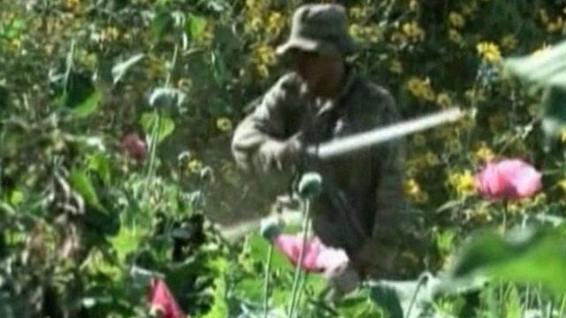 Mexican soldier destroys poppy plantation