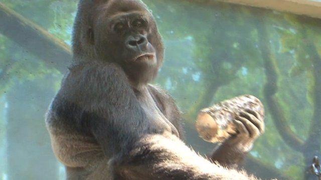 Sex zoo Nude Photos 70