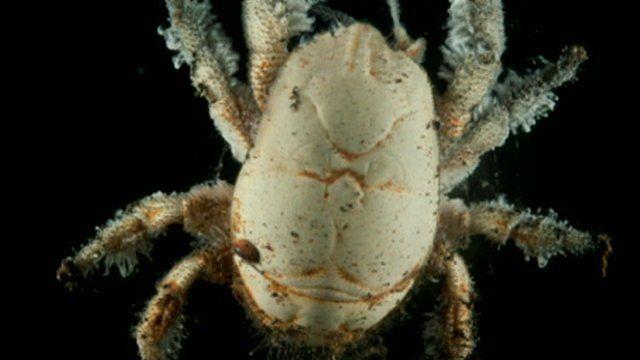 Very Rare Sea Animals Creatures found...