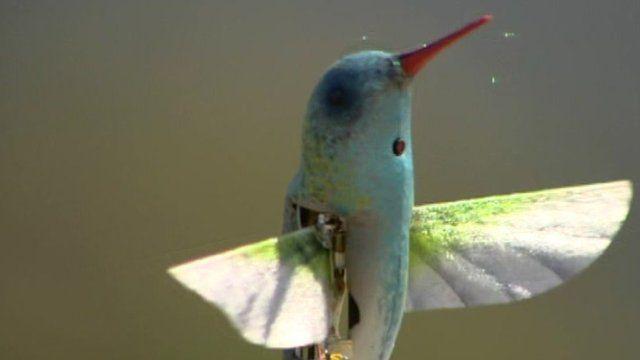 Bird drone