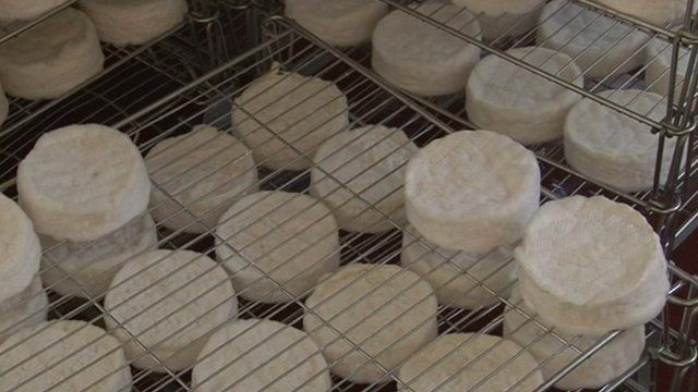 Camembert cheeses on rack