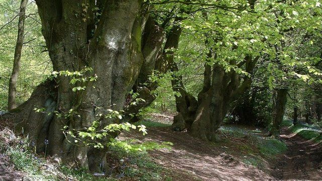 Wentwood Forest