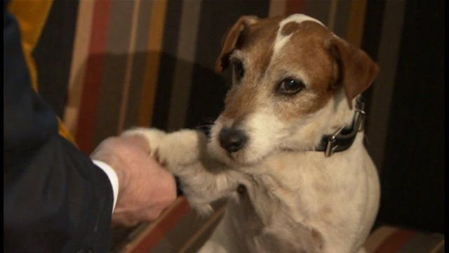 Uggie. A dog from the silent film The Artist