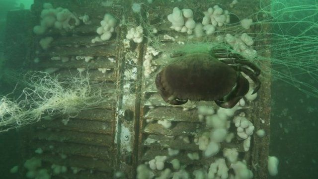 A crab in a fishing net