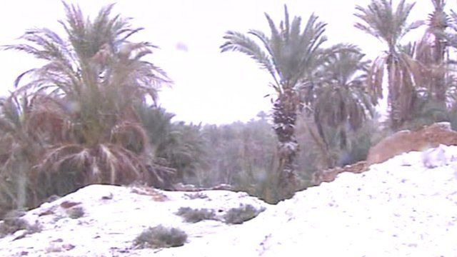 Snow and palm trees in Algeria