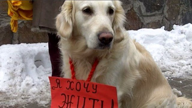 "Dog ""protester"""