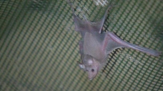 A bat