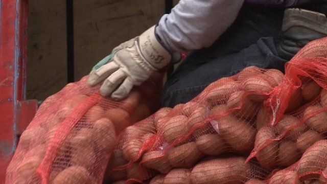 Gloved hand on top of large bags of potatoes in Greece.
