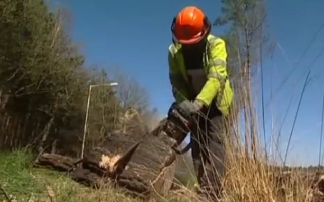 Burnt tree stumps are cleared away at Swinley Forest