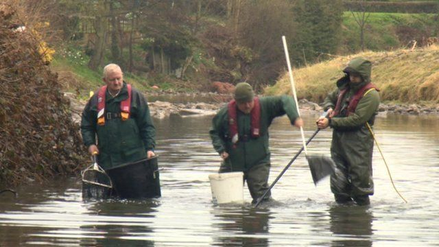 Environment Agency moved hundreds of fish at risk due to falling river levels on the River Rye near Helmsley in North Yorkshire