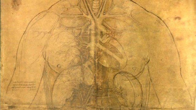Leonardo Da Vinci Anatomy Drawings On Show At Buckingham Palace